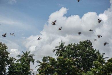 a-flock-of-birds-2811043__340